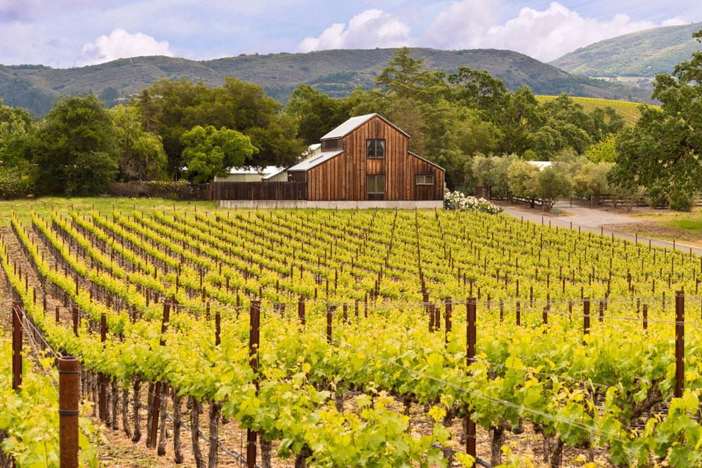 Wines North Of Napa