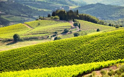 Wine Region QUIZ: Where Are Your Favorites From?