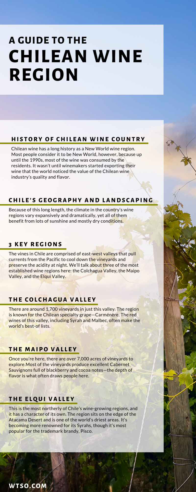 Chilean Wine Region