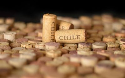 A Guide to the Chilean Wine Region