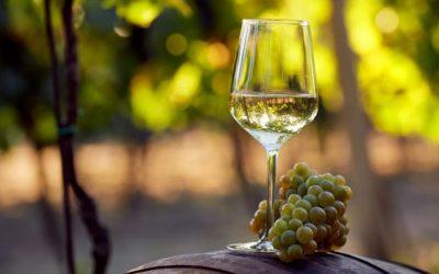 Our Favorite Summer White Wine Food Pairings