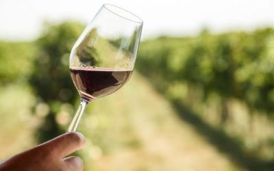 4 Key Players: A Guide to the Spanish Wine Regions
