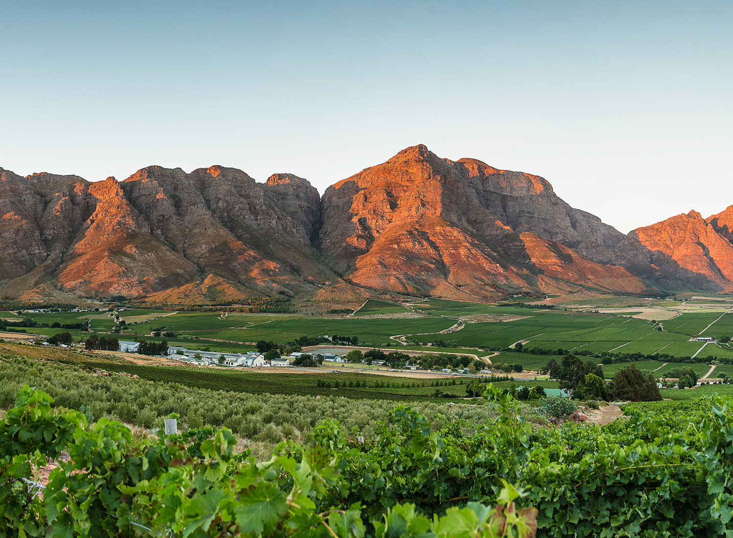 The Ultimate Guide to South African Wines